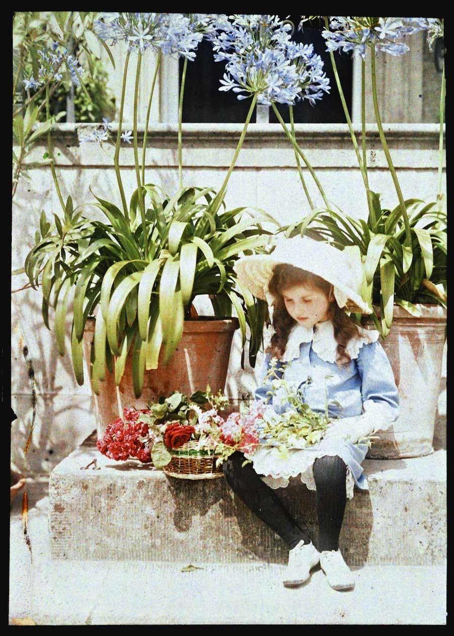 Etheldreda Laing Iris