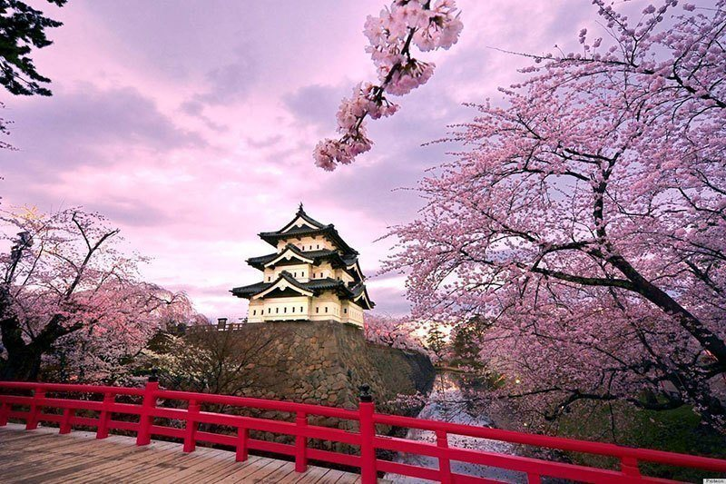 Beautiful Cherry Blossom Pictures