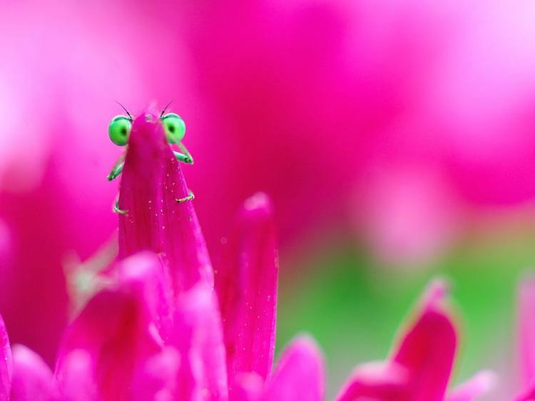Insect Pictures