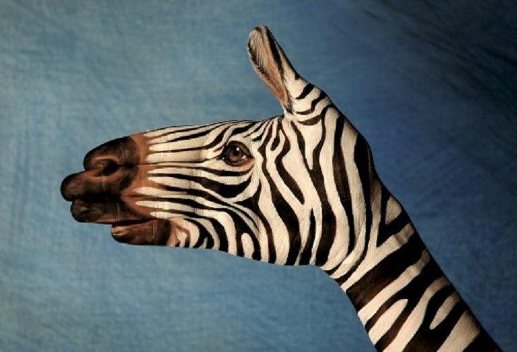 Zebra Handimals