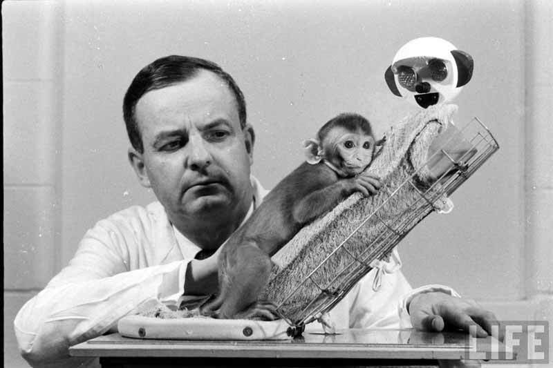 Harry Harlow and monkey surrogate doll