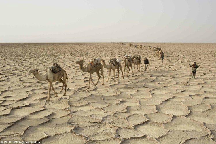 Hottest Place On Earth Camel Caravan