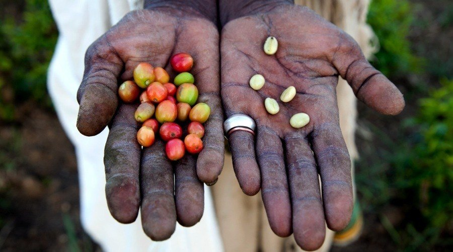 Kaldi Coffee Hands Beans
