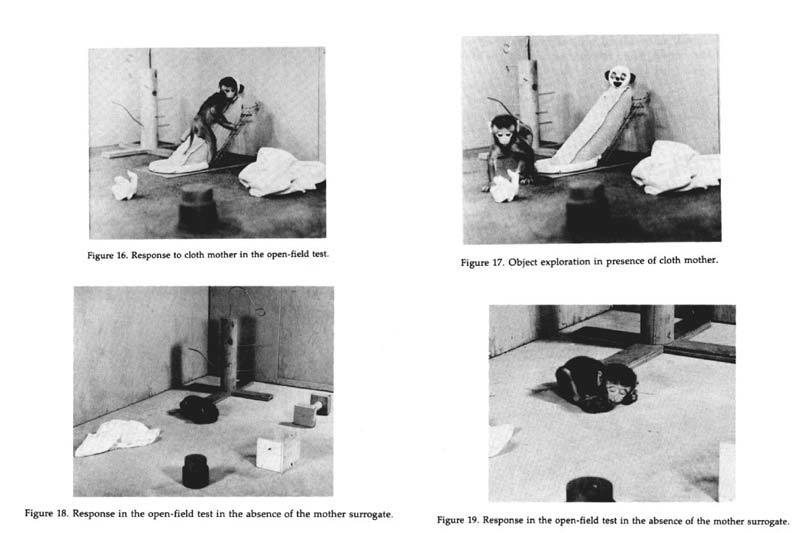 Monkey torture experiments in isolation