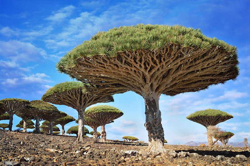 Unbelievable Places Yemen