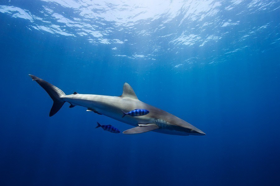 underwater animal photography blue stripes