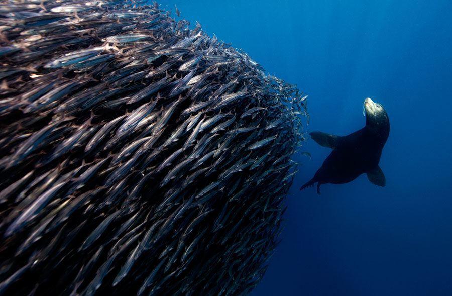 underwater animal photography feeding ball