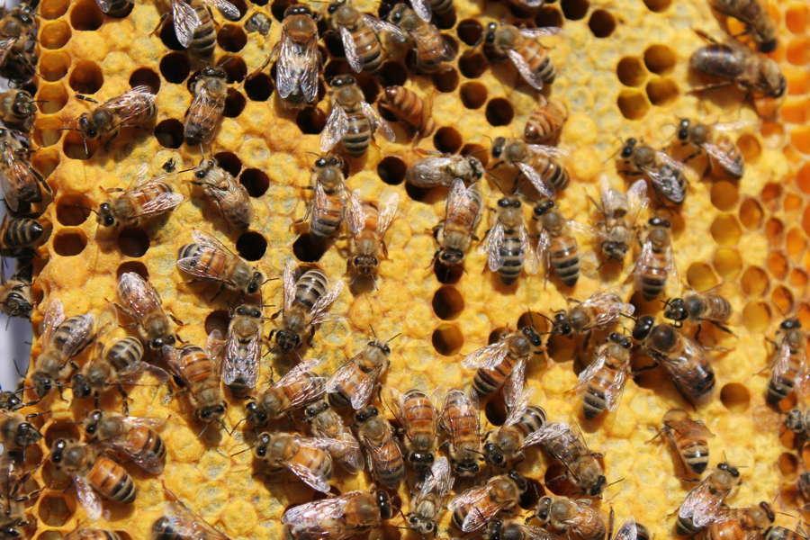 Bee Life