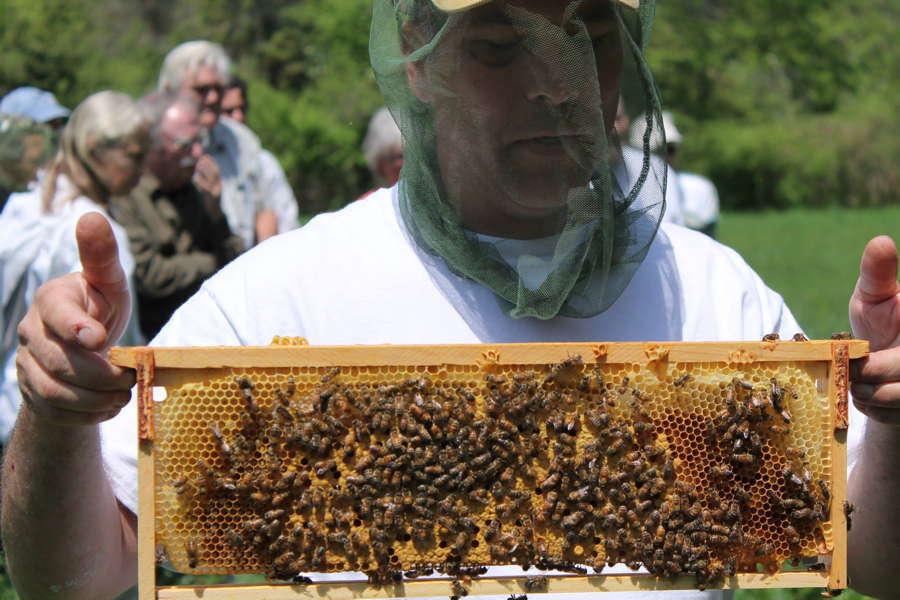 Bee Life David Edwards