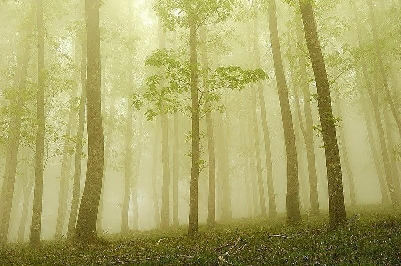 Eerie Forest Captures by Zapirain