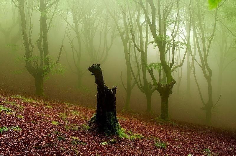 Charcoal Forest Zapirain
