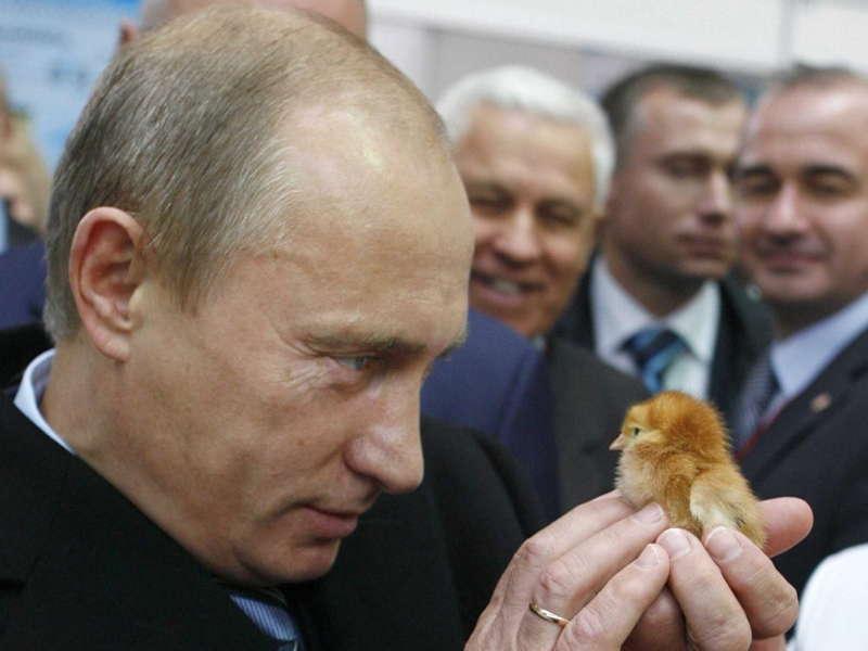Glamorous Putin Baby Bird