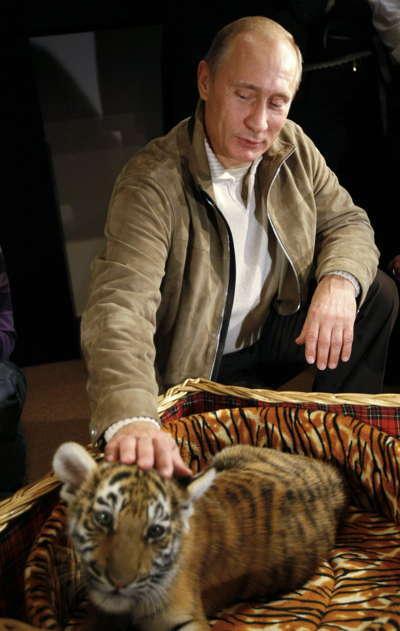 Putin Baby Tiger