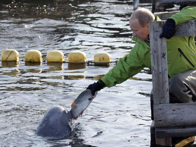Glamorous Putin Beluga