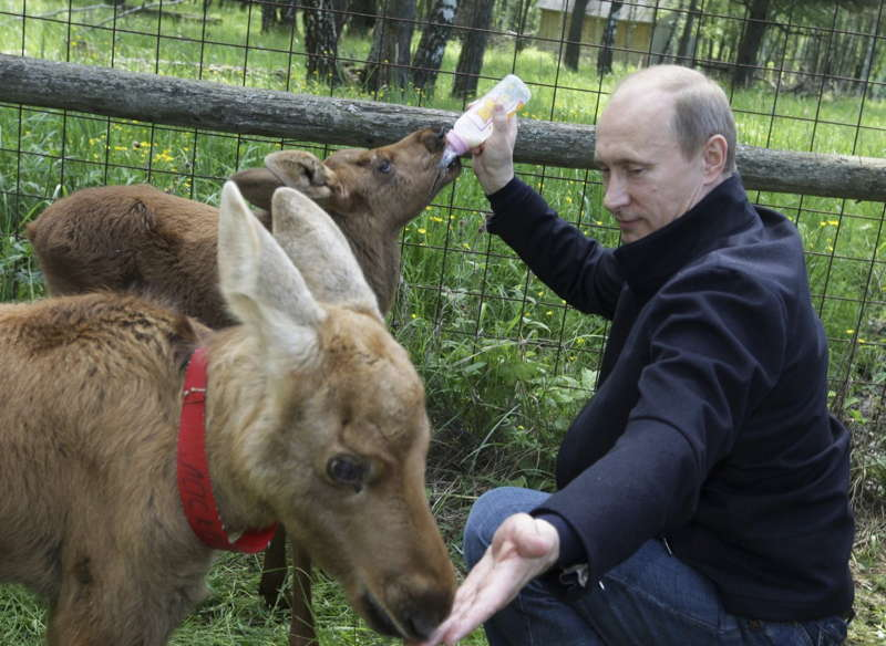 Glamorous Putin Elk Moscow