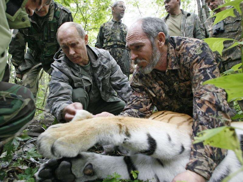 Putin With Tiger
