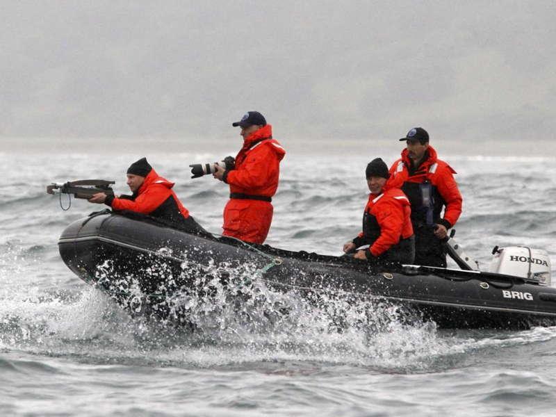 Putin Whaling