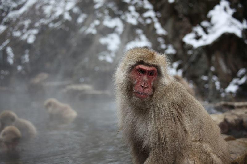 Natural Hot Spring in Japan