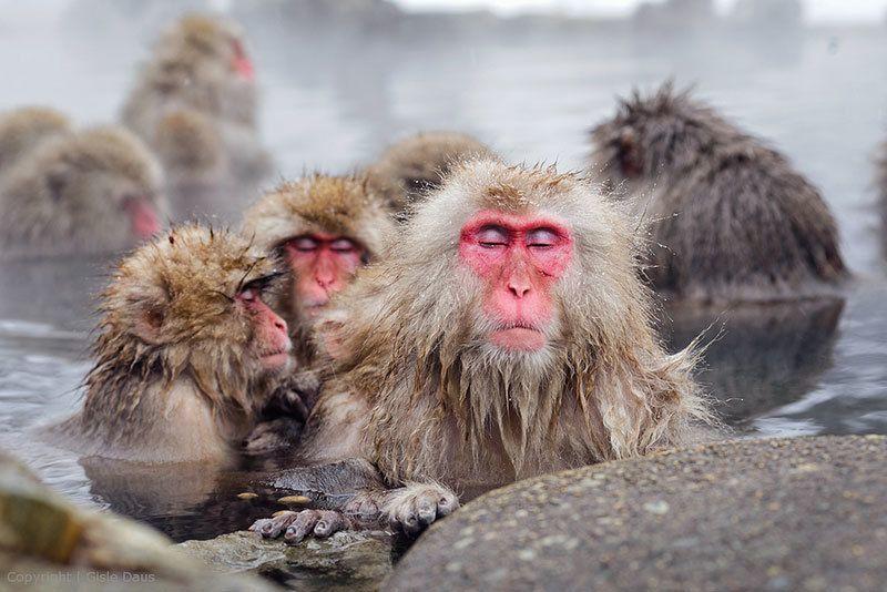 Jigokudani Monkey Park Pictures