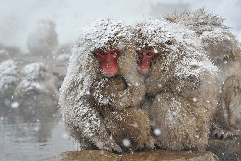 Monkey Park in Snow