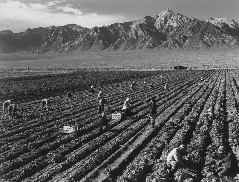 Manzanar Relocation Center Farming