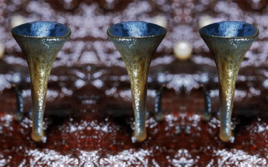 Coolest Mushrooms Cup