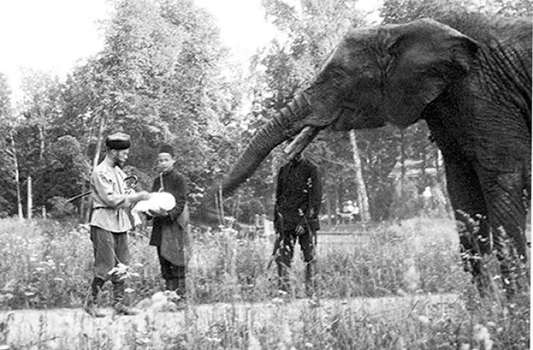 Romanov Last Days Elephant