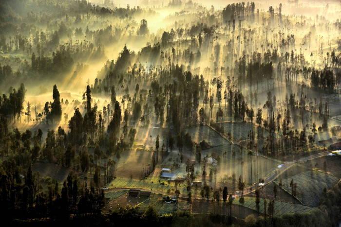 Sun Rays Field Fog