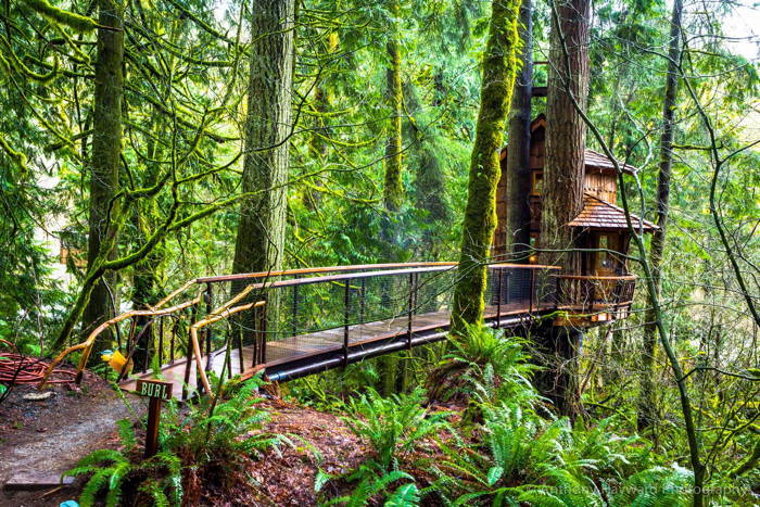 TreeHouse Point Forest Bridge