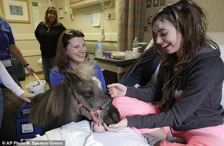 Miniature Therapy Horses Bedside