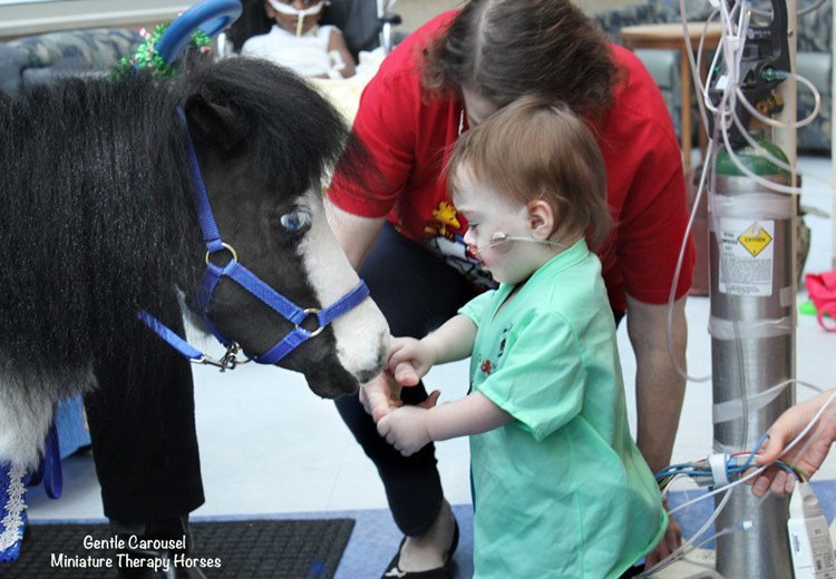 Therapy Horse Little Girl