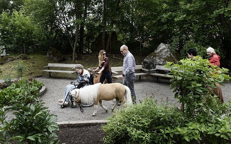 Miniature Therapy Horses Courtyard