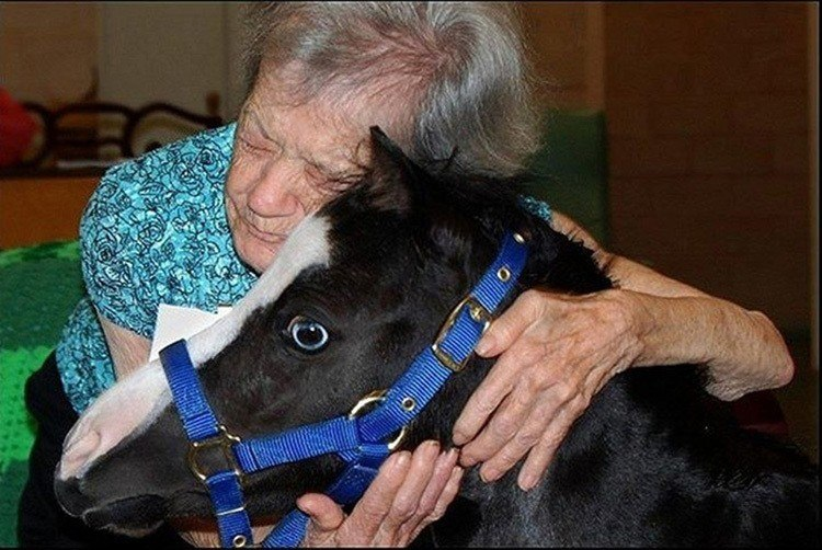 Therapy Horse Hug
