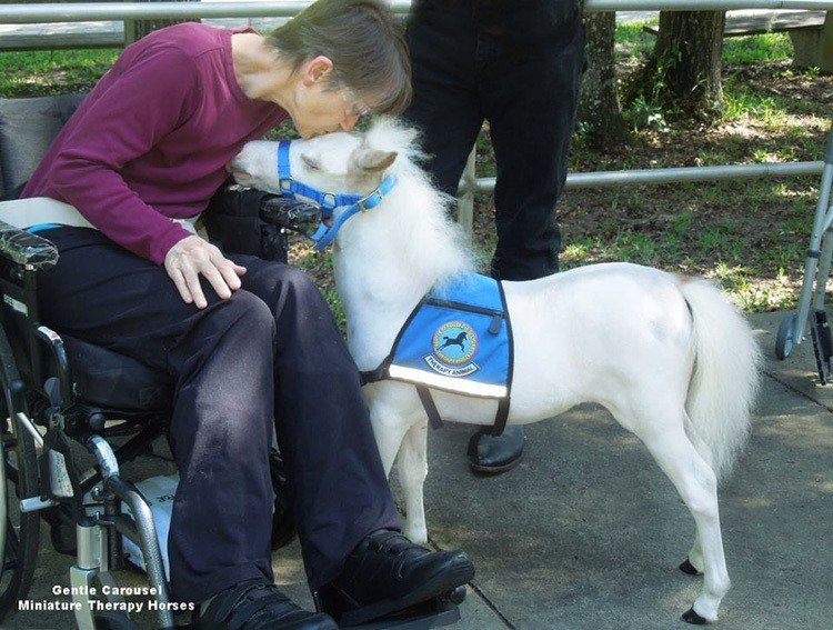 Therapy Horse Kiss Wheelchair