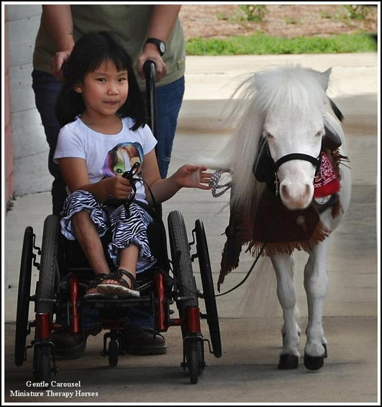 Therapy Horse Girl Wheelchair
