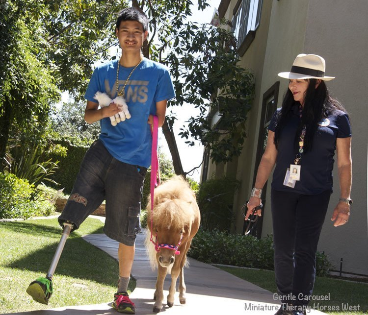 Therapy Horse Artificial Leg