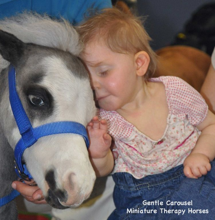 Therapy Horse Nuzzle