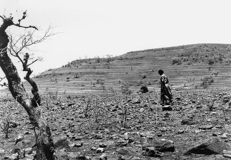Beta Israel Field