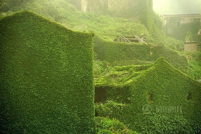 Goqui Island Green Out