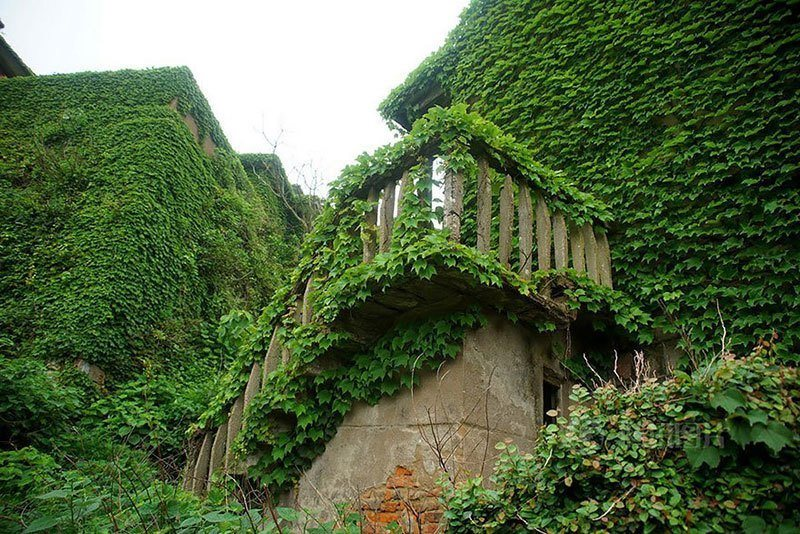 Ivy Covers Abandoned Chinese Village