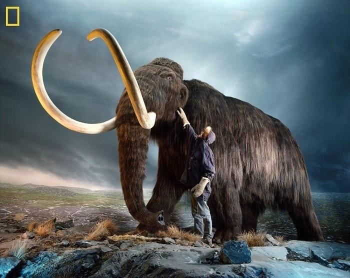 Woolly Mammoth Human