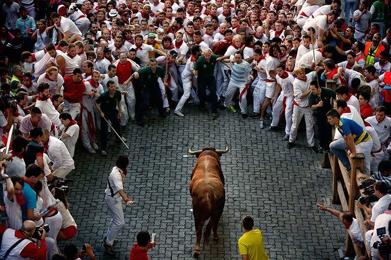 San Fermin Bulls