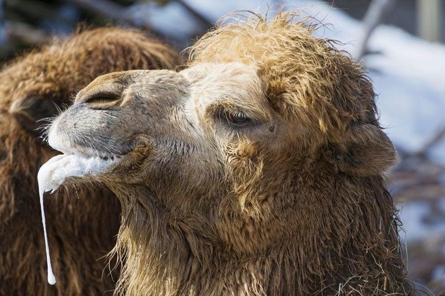 scariest contraceptives camel