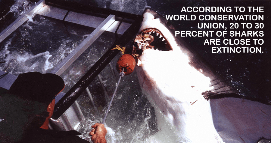 Shark Extinction