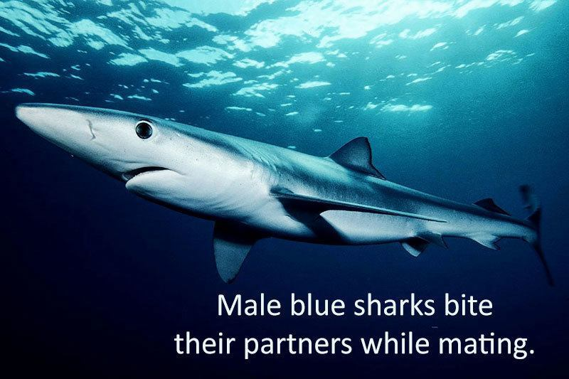 Interesting Facts About Sharks Mating Rituals