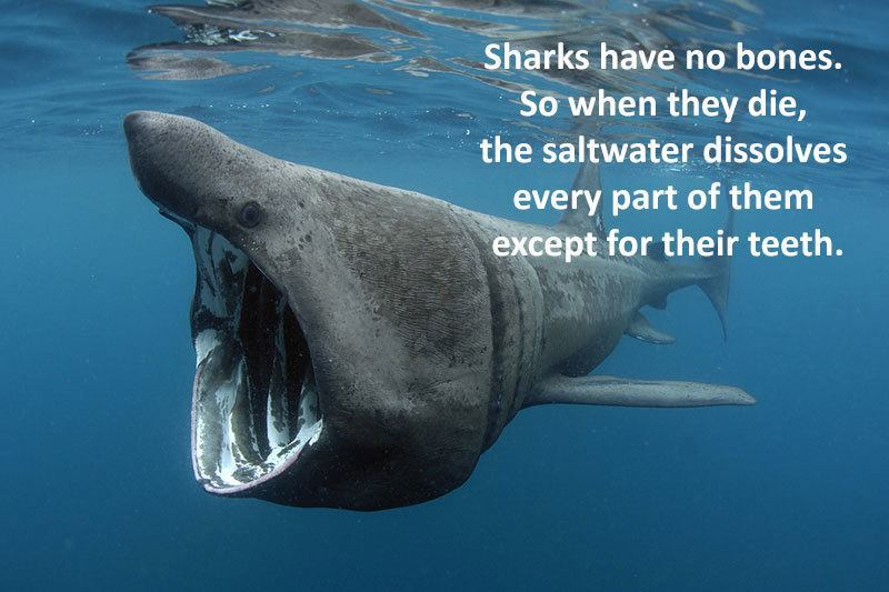 15 facts about sharks