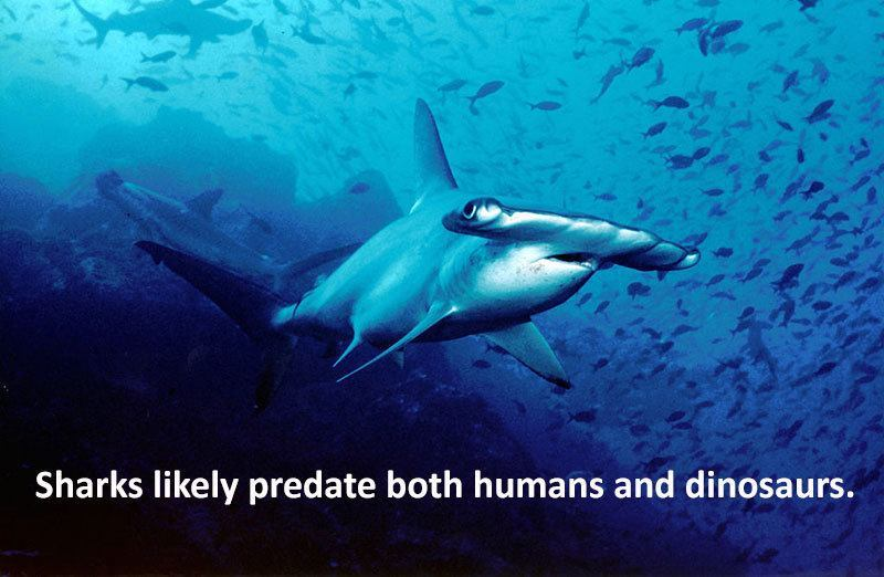 Prehistoric Shark Facts