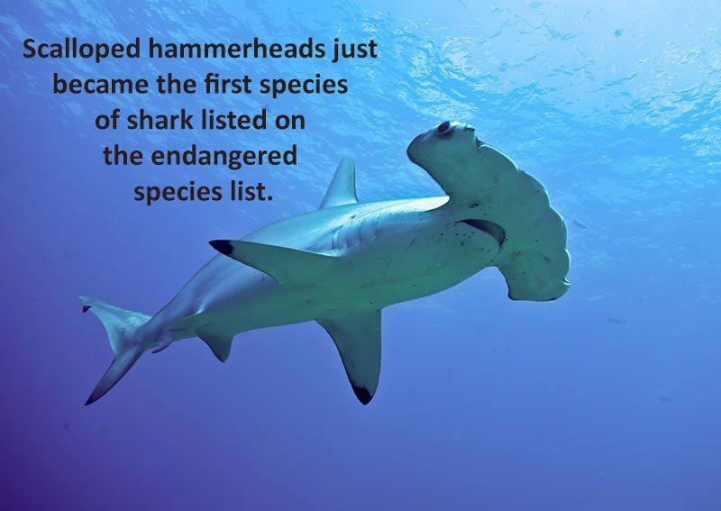 28 Interesting Shark Facts That Will Surprise And Amaze