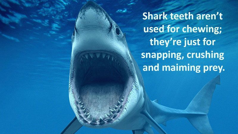 What Shark Teeth Are Used For
