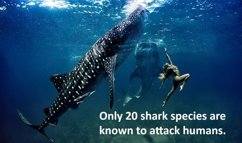 What Shark Species Attack Humans